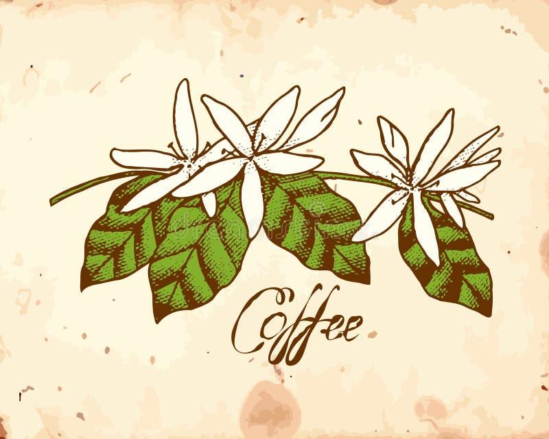 Kaffee-Blumen stock abbildung