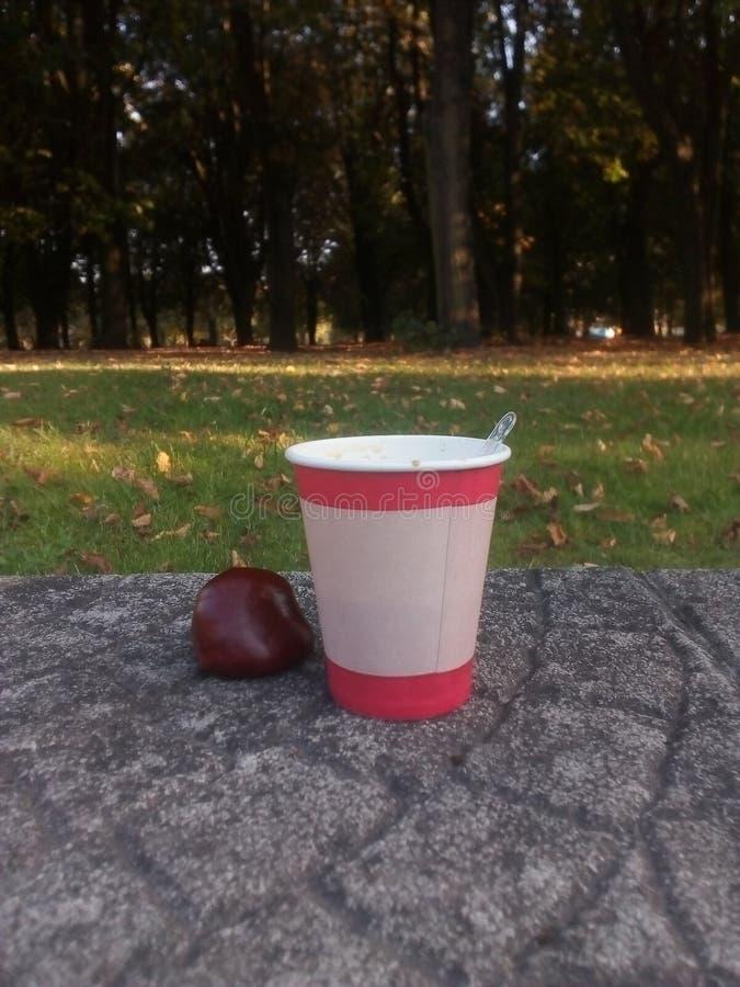 Kaffee in einer Papierschale steht auf einer Betondecke im Freien, nahe bei einer braunen Kastanie, Kaffeegetränk am frühen Morge lizenzfreies stockbild