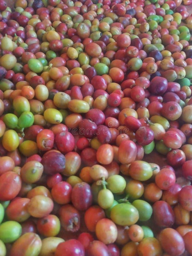Kaffee Gruppe Rohkaffee lizenzfreies stockbild