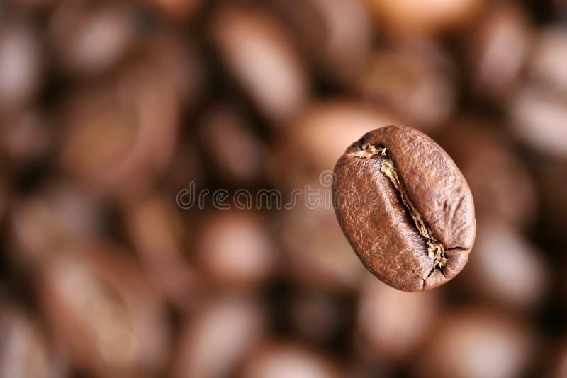 Kaffeebohne lizenzfreie stockfotografie