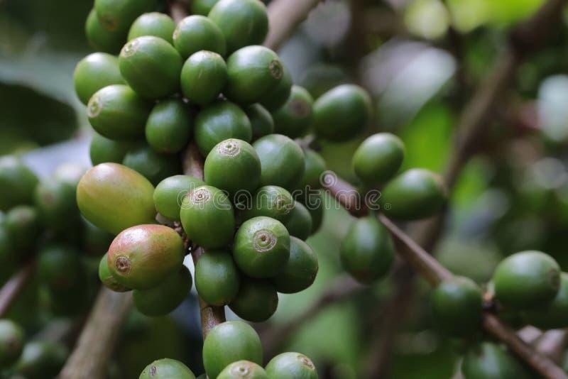 Kaffeebohne auf braunem Hintergrund lizenzfreie stockfotografie