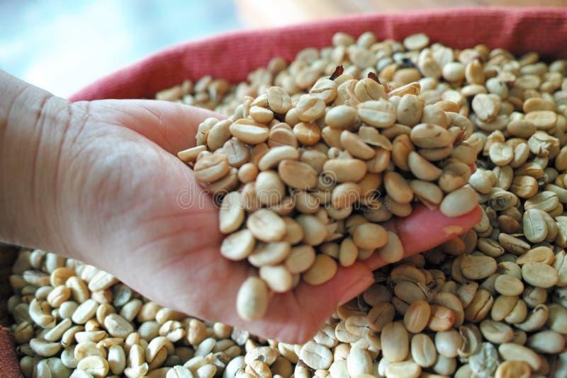 Kaffeebohne in der Hand stockfoto