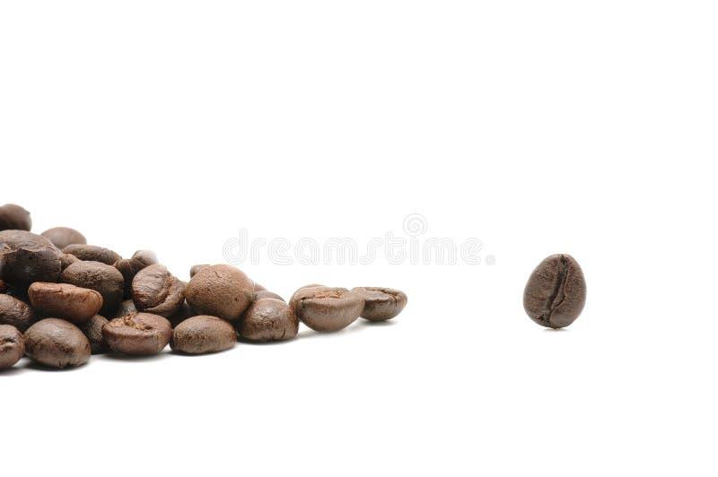 Kaffeebohne einzig stockfotografie