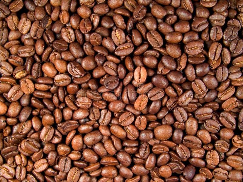 Kaffeebohnen stockfotografie