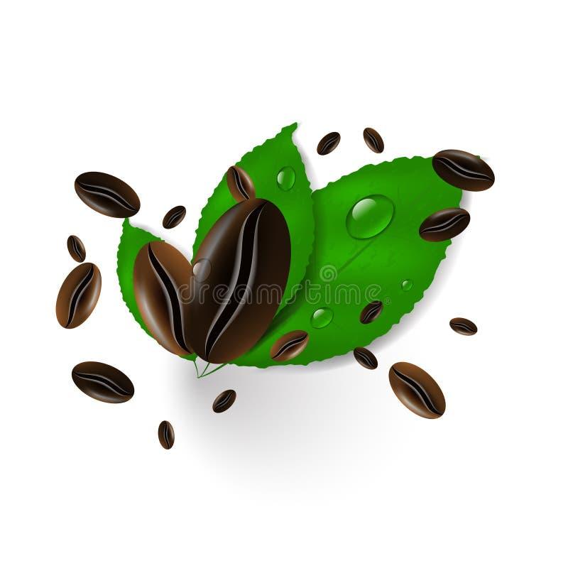 Kaffeebohnen auf einem weißen Hintergrund, Grünblättern und Wassertropfen lizenzfreie abbildung
