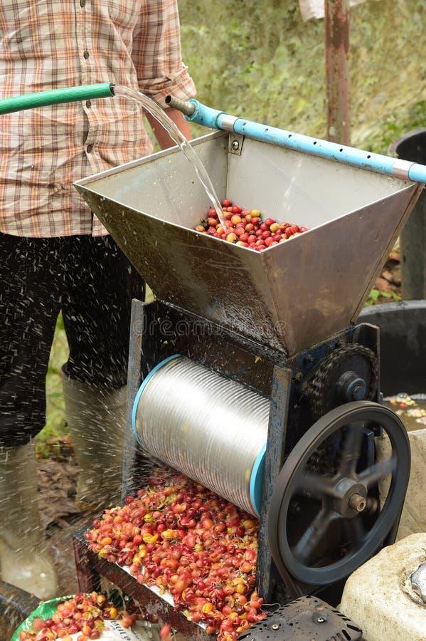 Kaffeebohnen, in der Ferment- und Wäschemethode lizenzfreie stockfotografie