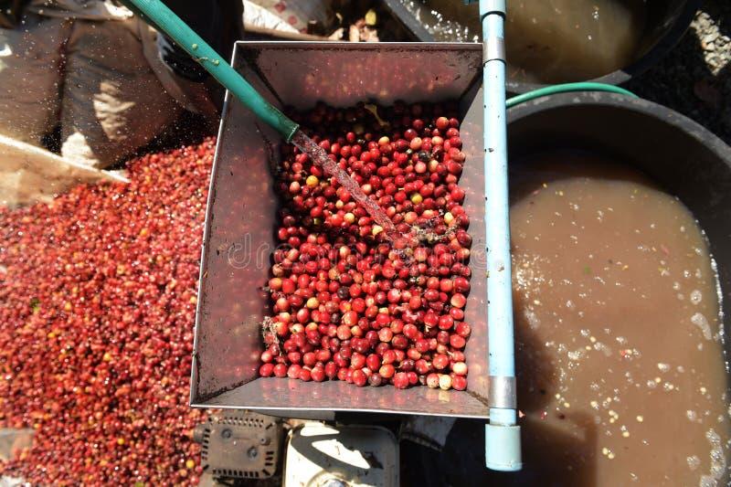 Kaffeebohnen, in der Ferment- und Wäschemethode lizenzfreie stockbilder