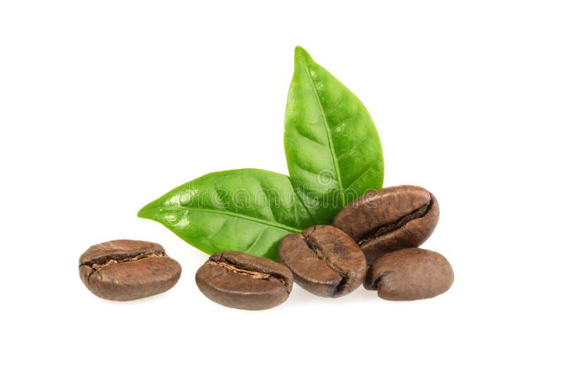 Kaffeebohnen mit den Blättern lokalisiert lizenzfreie stockfotos