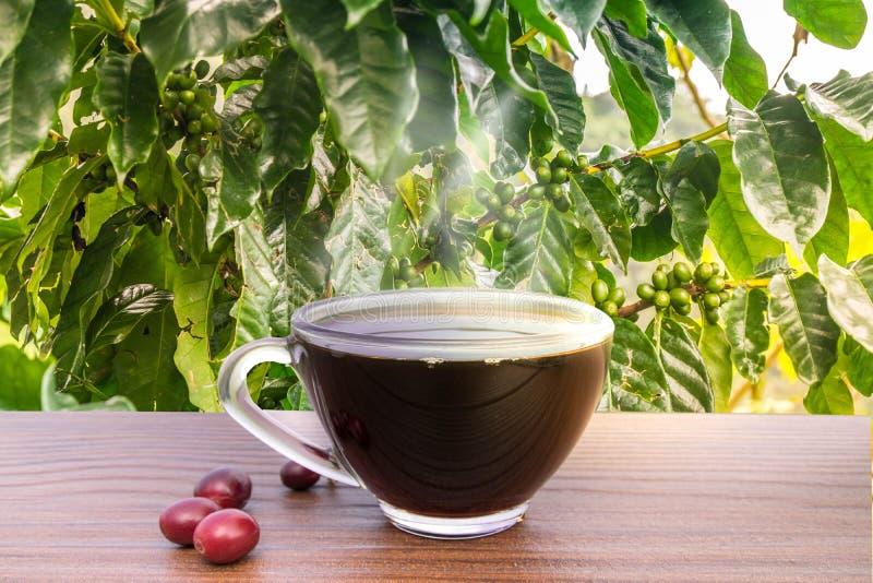Kaffeebohnen mit Samen stockfotos
