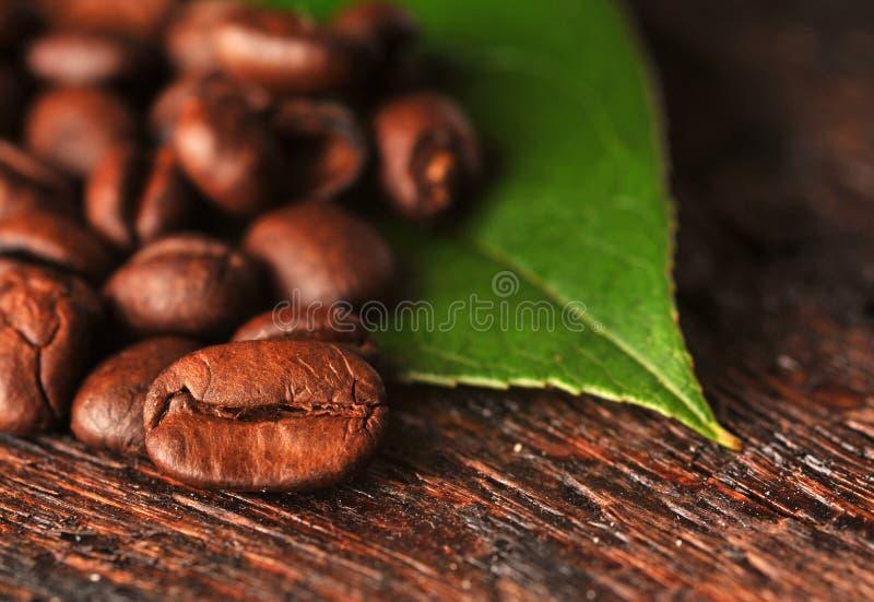 Kaffeebohnen und Blatt lizenzfreie stockfotos