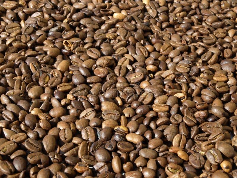 Kaffeebohnen. Viele Kaffeebohnen in der Sonne royalty free stock images