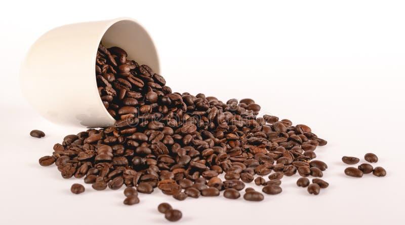 Kaffeebohnen von der weißen keramischen Schale lokalisiert auf weißem Hintergrund Kopieren Sie Raum, Abschluss herauf Schuss lizenzfreies stockbild