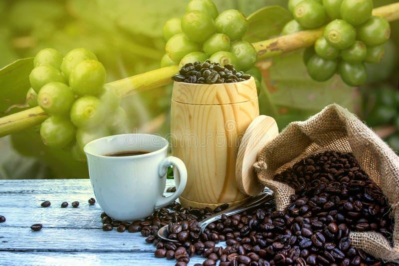 Kaffekopp, kaffebönor arkivbilder