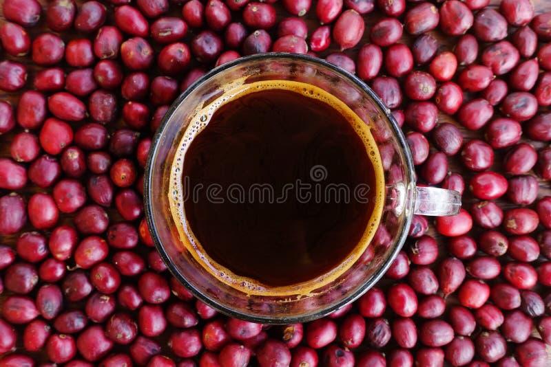 Kaffekopp och nya bärbönor royaltyfri fotografi