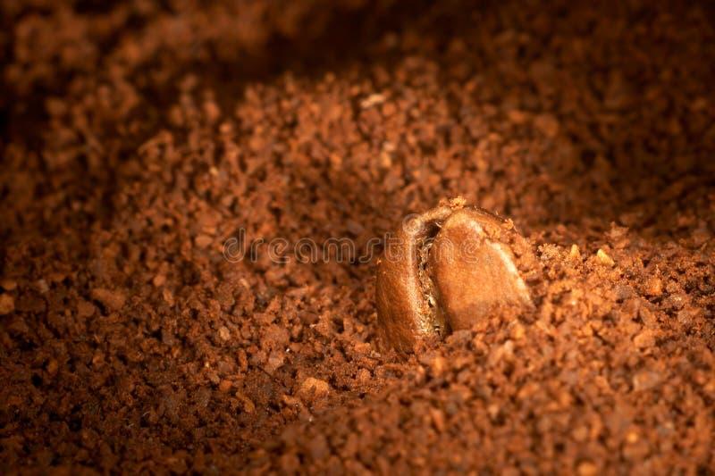 kaffekornjordning arkivbilder
