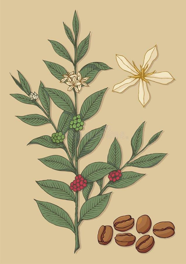 kaffetree royaltyfri illustrationer