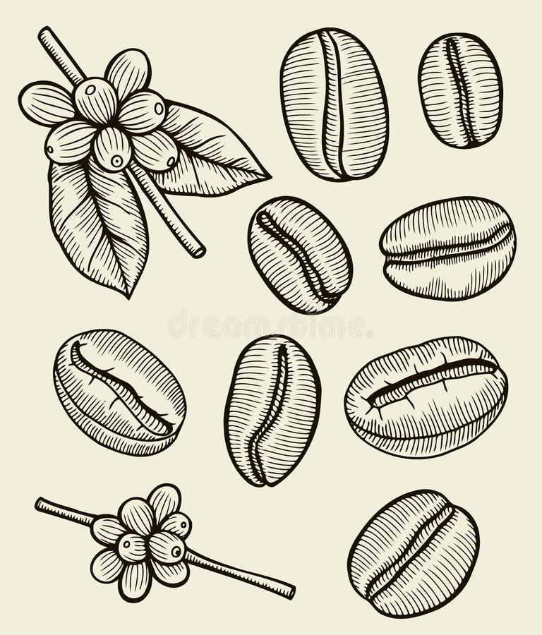 Kaffeväxtfilial med bladet stock illustrationer
