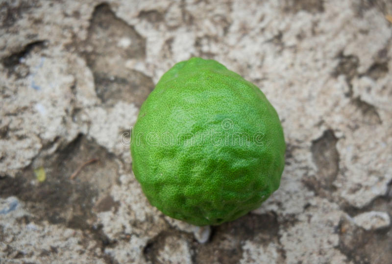 Kaffir lime - Bergamot royalty free stock photography