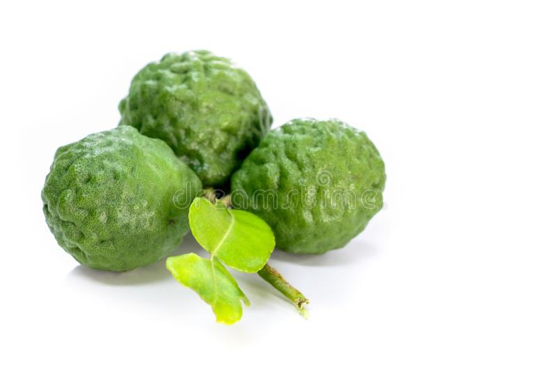 Kaffir lime white background in studio. Kaffir lime Close up for Isolated stock images