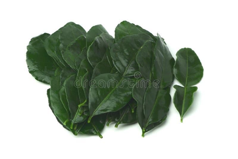 Kaffir Lime Leaf or Bergamot Leaf stock images