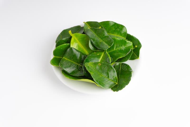 Kaffir lime leaf Daun limau purut isolated on white background stock photos