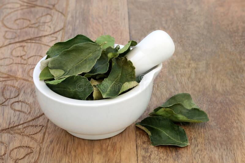 Kaffir Lime Leaf Herb used in Herbal Medicine royalty free stock photography