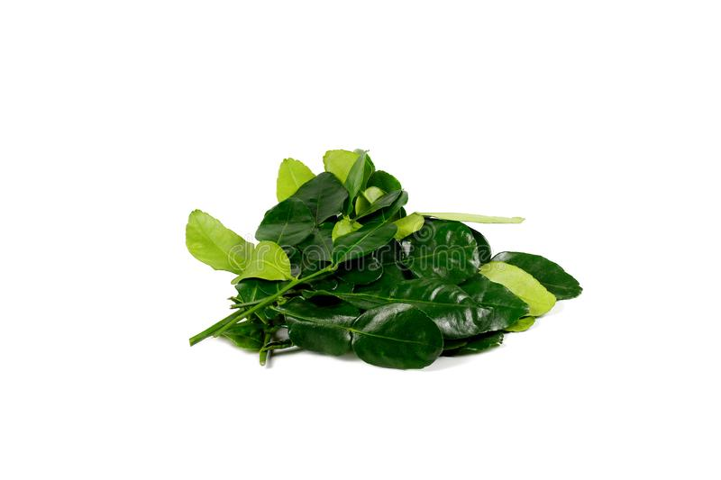 Kaffir lime leaf isolated on white background royalty free stock photography
