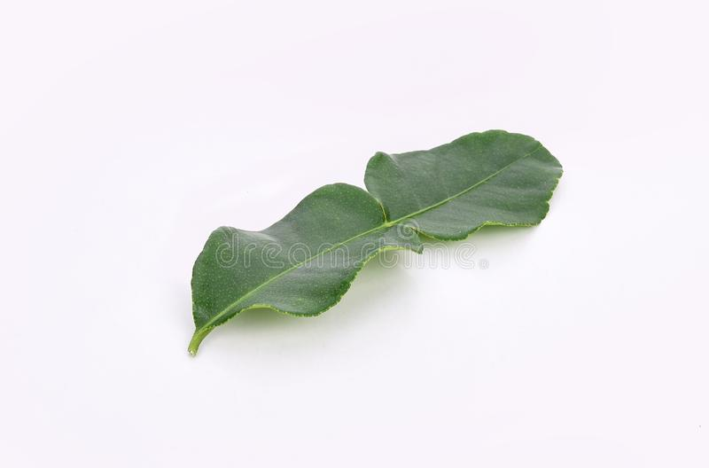 Kaffir lime leaf isolated on white background royalty free stock image