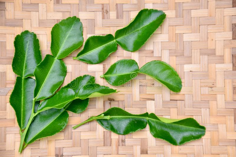 Kaffir lime leaf stock photos