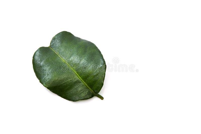 Kaffir lime leave. Close up of kaffir lime leave on white background stock photography