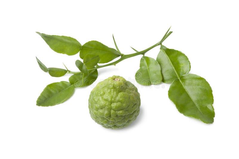 Kaffir lime and leaves stock photos