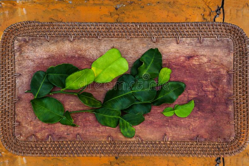 Kaffir lime leaves from above stock photo
