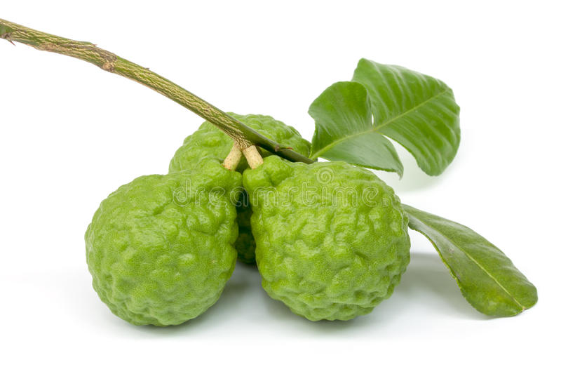 Kaffir Lime with leaves royalty free stock photography