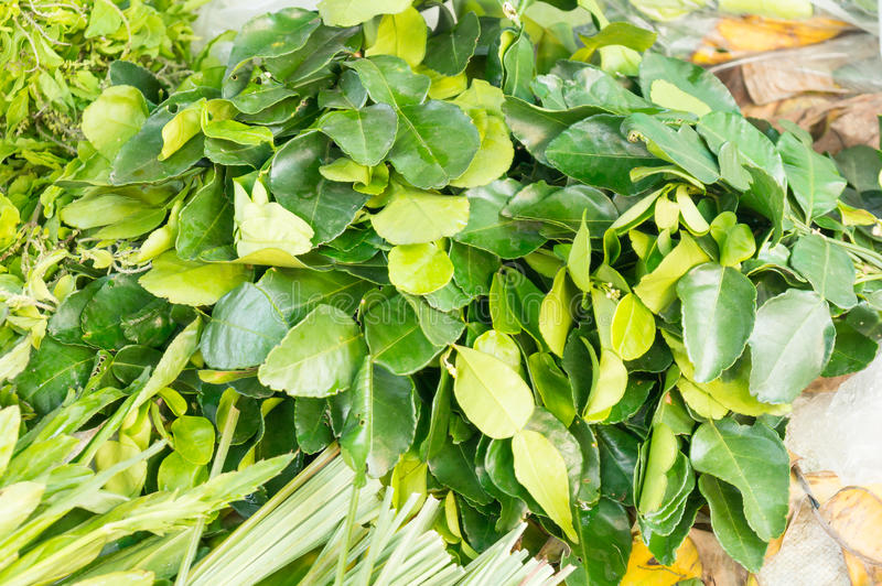 Kaffir lime leaves in market stock photos
