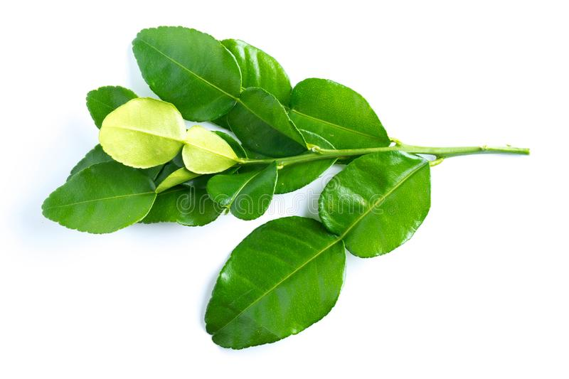 Kaffir lime leaves on white. Background royalty free stock photography