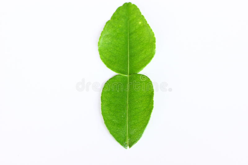 Kaffir lime leaves. With white bagground stock image