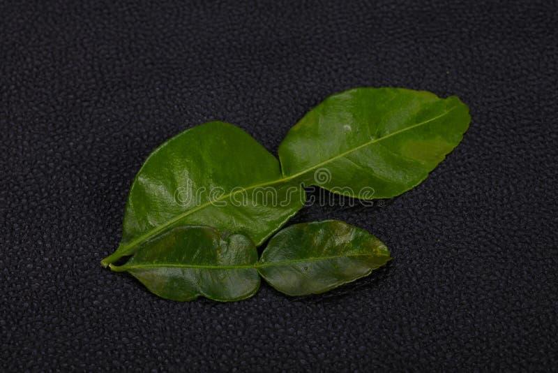 Kafir lime leaves - addition for Asian cuisine stock photography