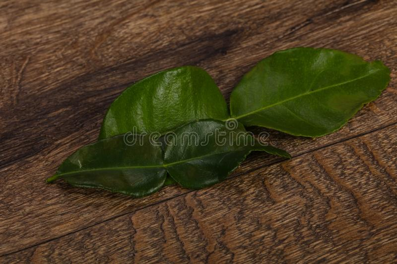 Kafir lime leaves - addition for Asian cuisine. Soup royalty free stock image