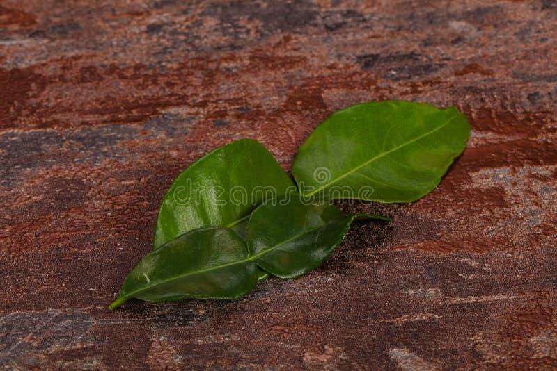 Kafir lime leaves - addition for Asian cuisine stock image