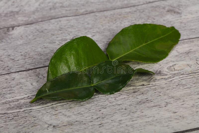 Kafir lime leaves - addition for Asian cuisine stock photos