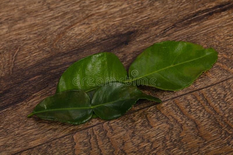 Kafir lime leaves - addition for Asian cuisine royalty free stock photo