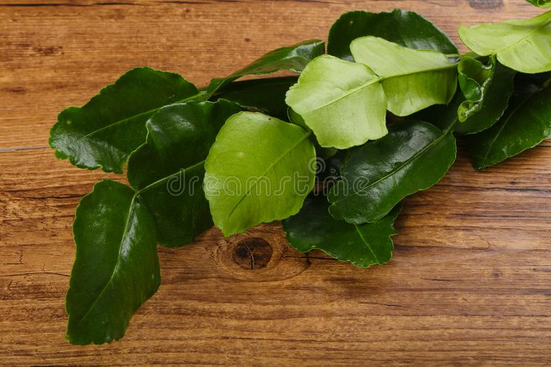 Kafir lime leaves stock image