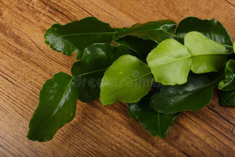 Kafir lime leaves stock photos
