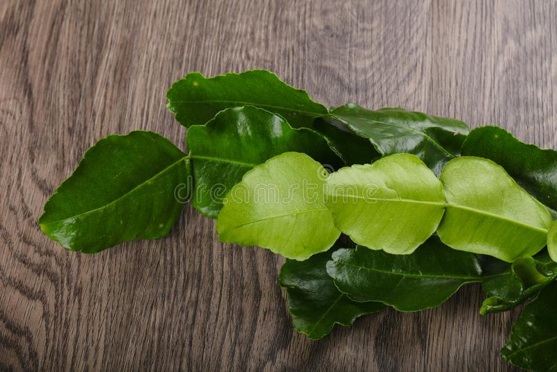Kafir lime leaves royalty free stock photo