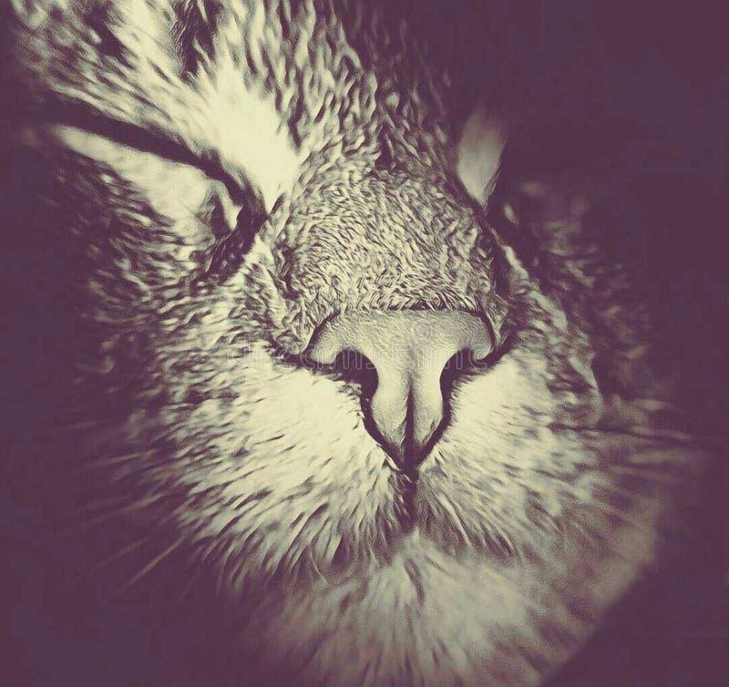 Kaganiec kota zakończenie ciemny traktowanie zdjęcia stock