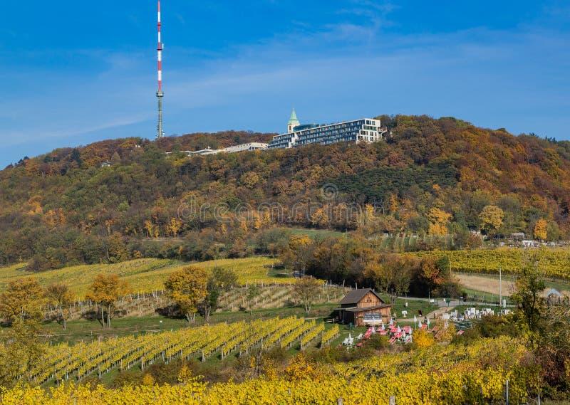 Kahlberg och vingårdar i Wien arkivfoto