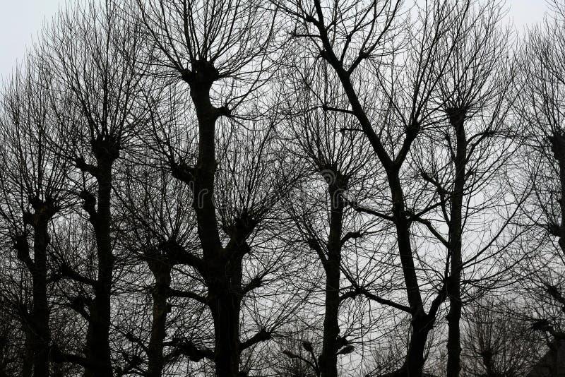 Kahle Bäume in Portugal stockfotografie