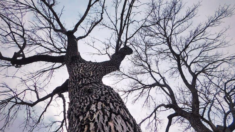 Kahle Bäume während der Winterzeit stockbild