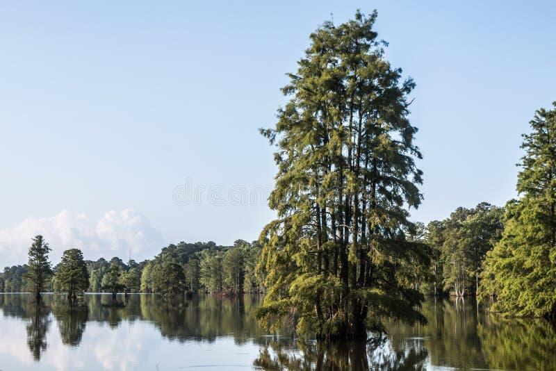 Kahle Zypresse-Bäume am gedrungenen See stockbild