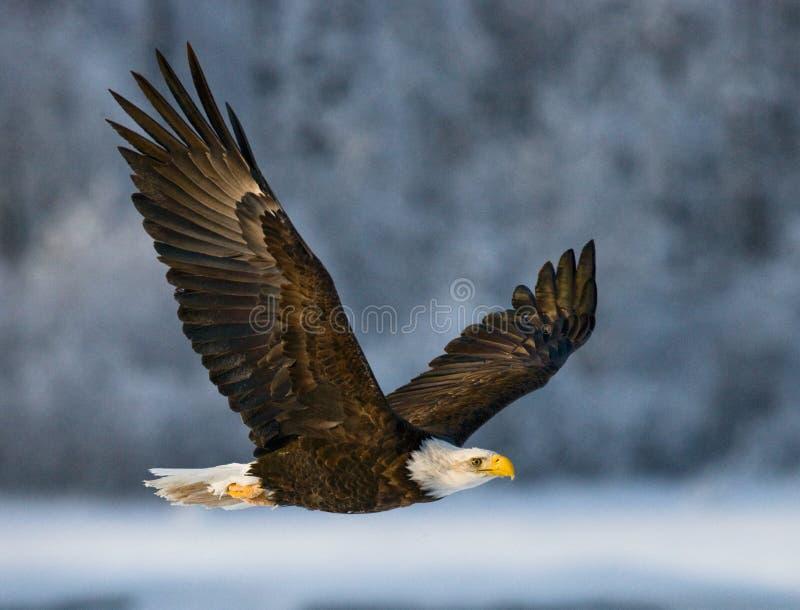Adler Fluss Alaska Fotos